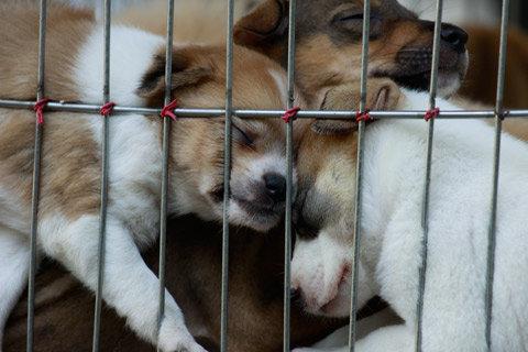 Bức hình 2 chú chó con chạm vào nhau đạt giải 3 chủ đề chạm của tác giả Vũ Ngọc Thiết.