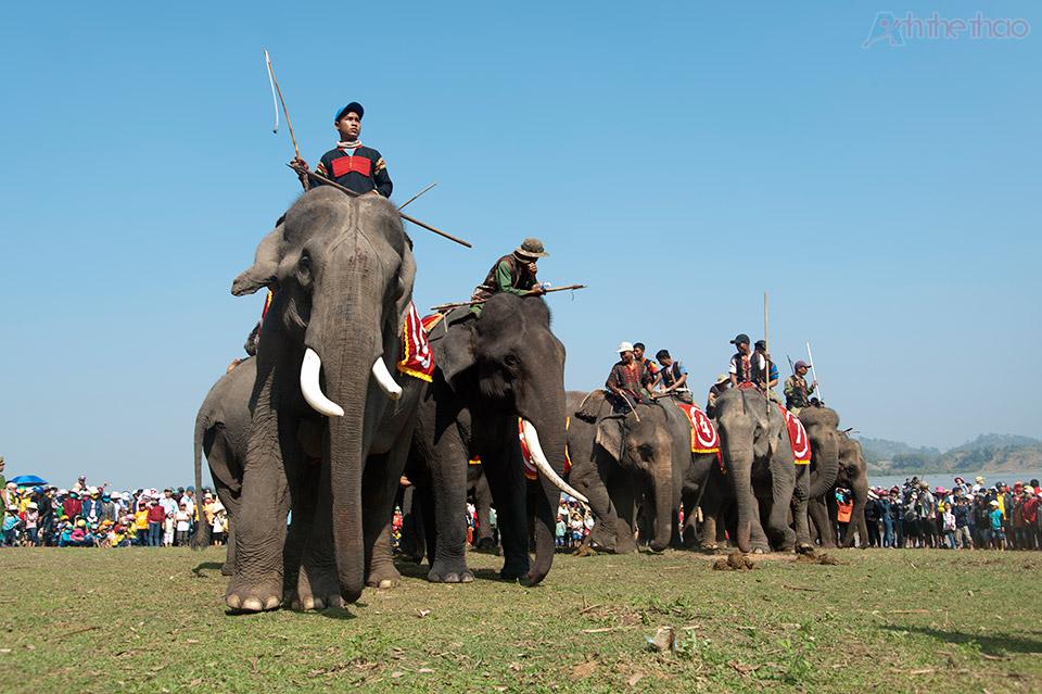 Ngày hội đua voi tại Hồ Lắk