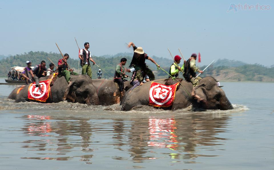 Đường đua dưới nước quá sâu, voi di chuyển rất chậm chạp dù liên tục bị thúc gậy và đập vào mông bằng búa